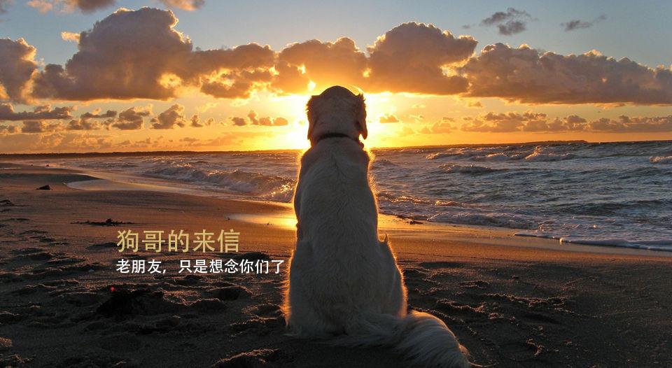 狗狗来了_Tisiwi
